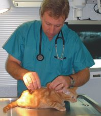 Dr. Trey Rogers, Veterinary Express